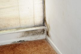 Non–Toxic Ways To Get Rid Of Black Mold